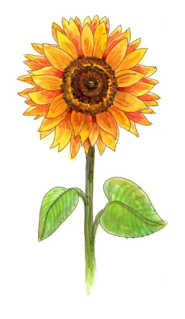 Easy Flower Drawings For Beginners